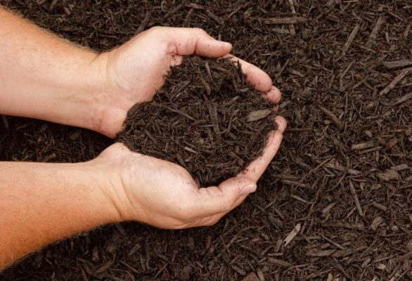 Hands displaying dark brown mulch for gardening
