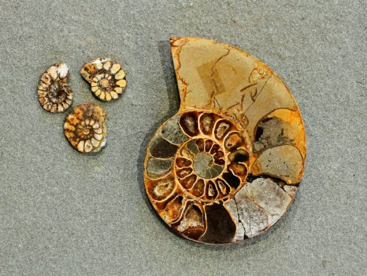 fossil gift collection at stone garden