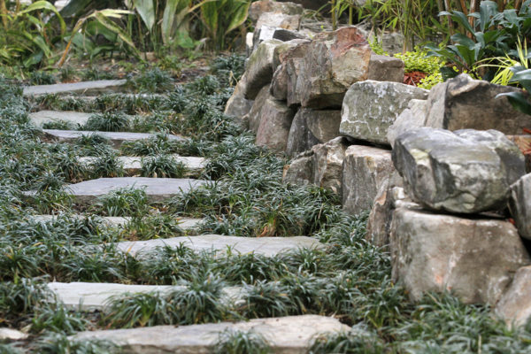 natural stone pathway nestled in mondo grass